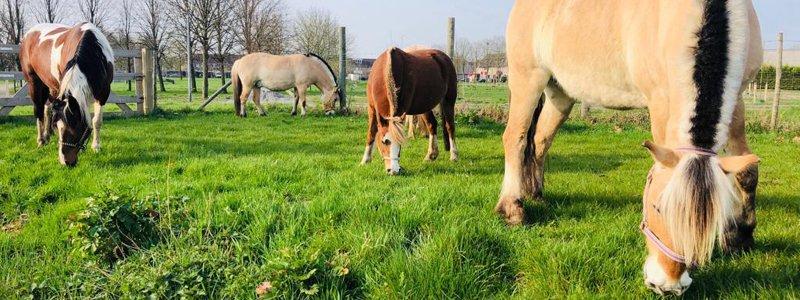 Paarden helpen mensen met autisme.